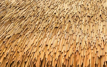 Thatch Roofing Compare Quotes